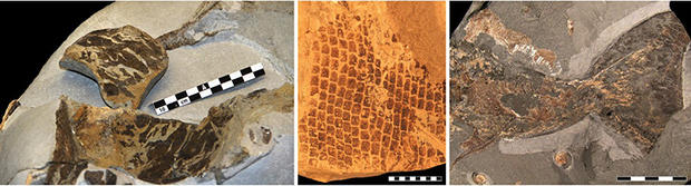 skin-fossils-140108.jpg
