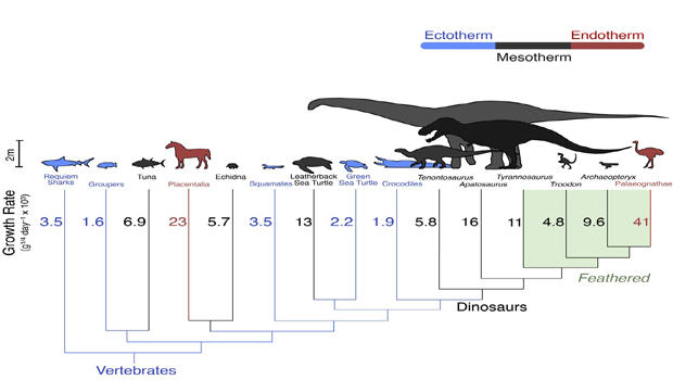 dinosaur-growth-rates620x350.jpg
