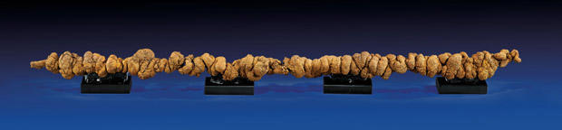 fossilized-poop620x144.jpg