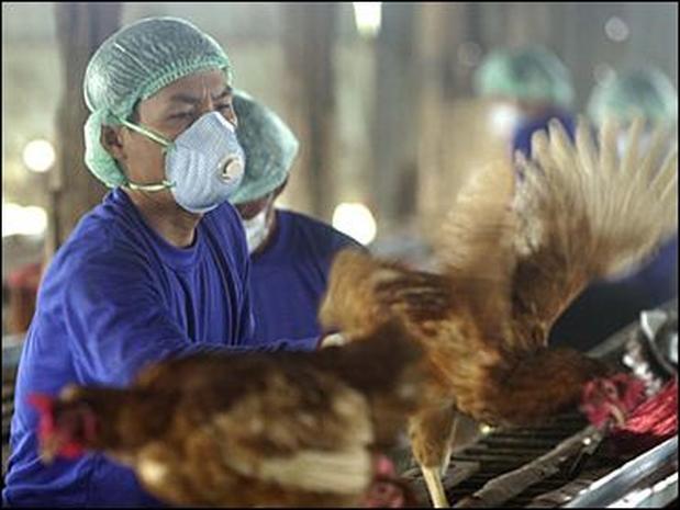 Bird Flu 2004