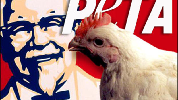 kfc animal cruelty Cascade animal protection society sumner when a few friends and i first saw a video of kfc animal cruelty a few years ago , we were all motivated to help make a difference.