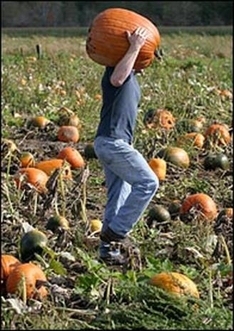 2004: Pumpkins On Parade