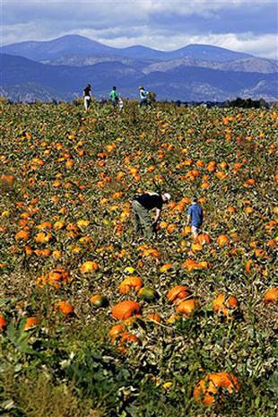 Pumpkins On Parade 2006