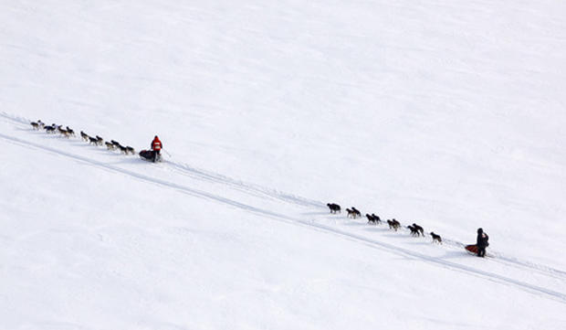 Iditarod Dog Sled Race