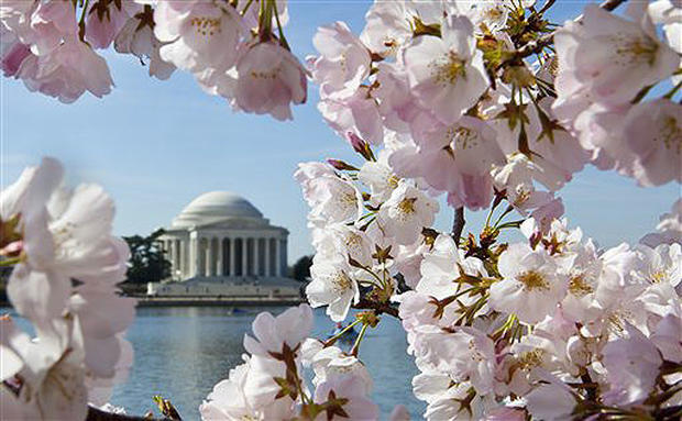 Washington In Bloom