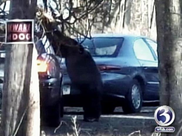 Chimp Victim Charla Nash