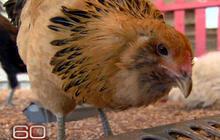 Web Extra: Dino Chicken