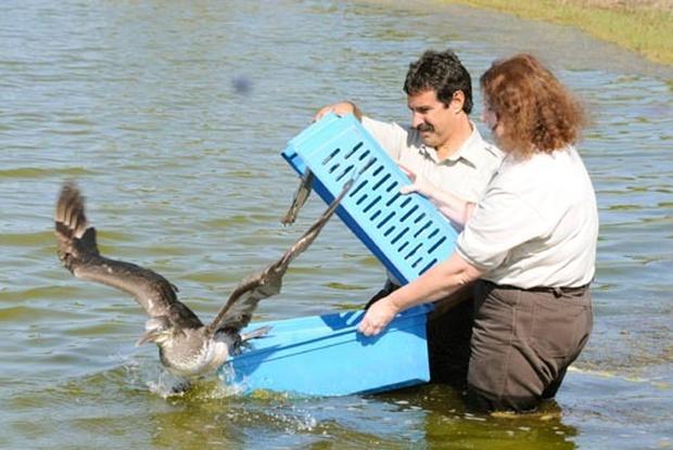 Oil Spill Threatens Wildlife