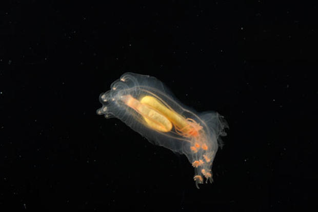 New Sea Creatures Discovered
