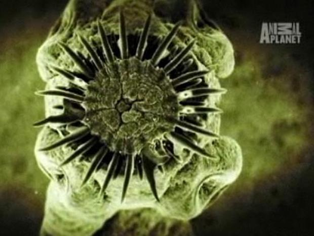 10 Most Terrifying Parasites Ever