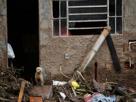 A dog stands at the entrance of a damaged house after a landslide in Teresopolis, Brazil.