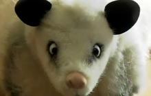 Heidi, the cross-eyed opossum dolls