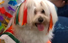 Fashion and Fido: Dogs walk the runway