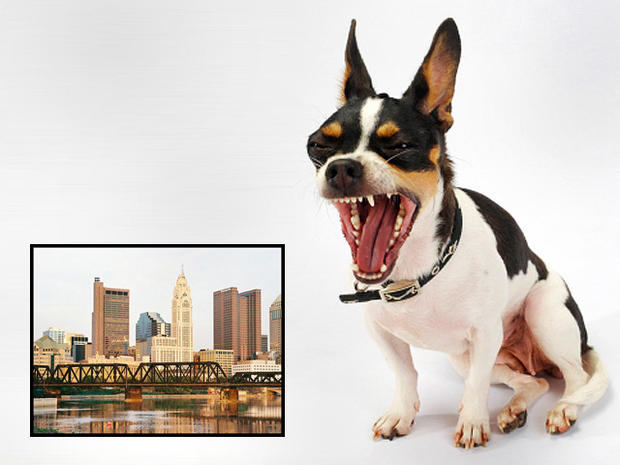 Danger! 15 worst cities for dog attacks