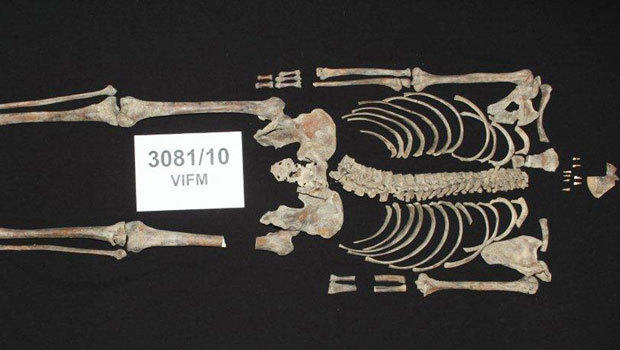 Bones of Australian bandit Ned Kelly identified�