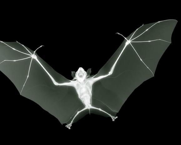 Amazing X-ray art reveals hidden beauty