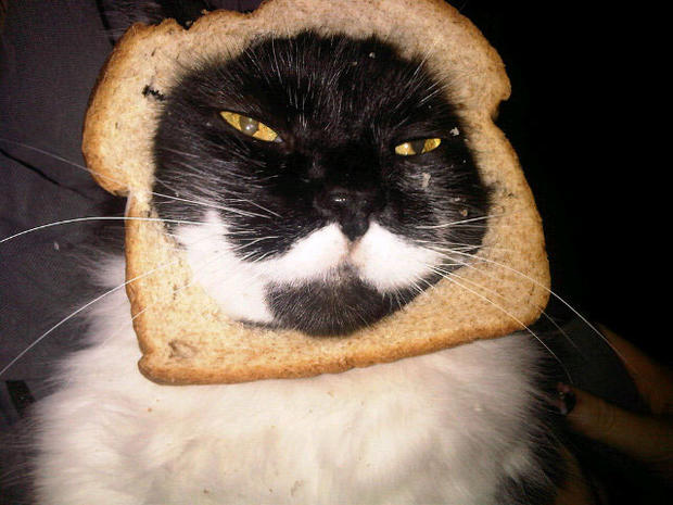 """Breading cats"" is latest web photo fad"