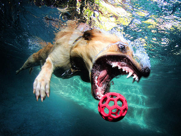 """Underwater Dogs"" photos go viral and become a book"
