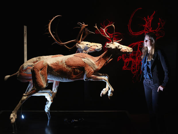 """""""Animals Inside Out"""" unveiled in London"""