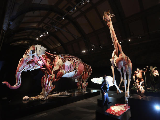 """Animals Inside Out"" unveiled in London"
