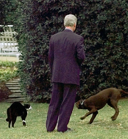 All the presidents' pups