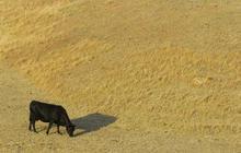 Massive drought strikes U.S.