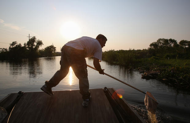 Bayou bug hunters