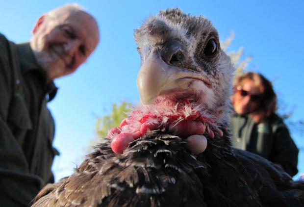 Caring for raptors