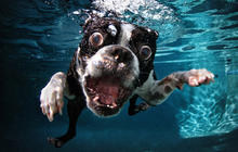 """""""Underwater Dogs"""" photos go viral and become a book"""