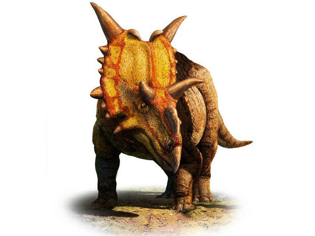 "Xenoceratops (meaning ""alien horned-face"") had massive spikes at the top of its head, two hooks jutting from its forehead, and a ruffled shield around its neck."