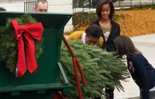 The White House Christmas Tree arrives