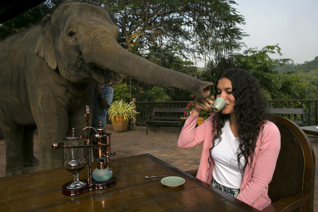 Pricey elephant poop coffee
