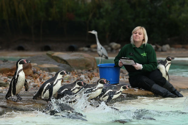 London Zoo starts annual census