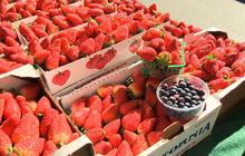 Berries may help women fight heart disease