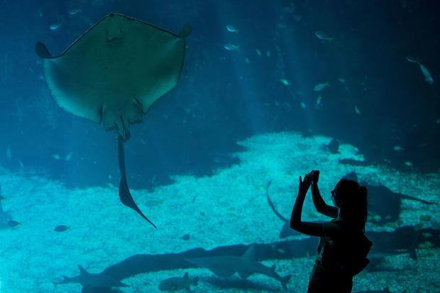 Inside the world's largest aquarium