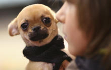 Common household items that can lead to a costly trip to the veterinarian