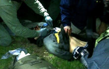 Tsarnaev in critical condition; unable to speak