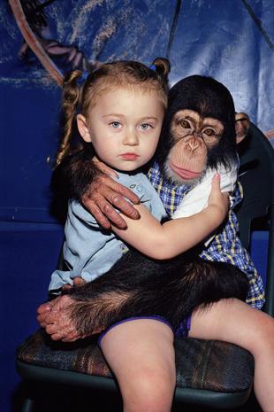 Amelia and the animals