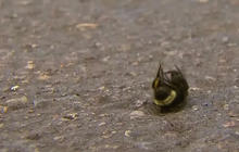 Thousands of bumblebees found dead in Oregon
