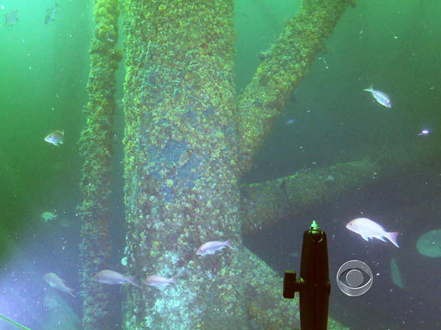 Federal law says old oil rigs must be removed, but one off the Louisiana coast attracts thousands of sea creatures.