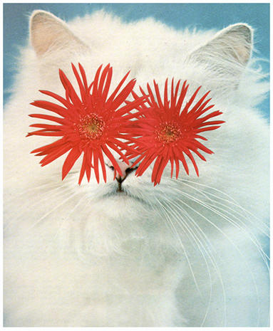 Surreal collages of cats and botanicals