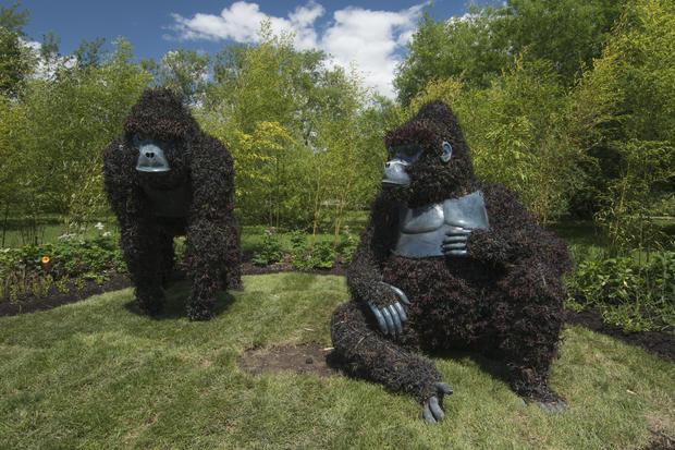 Incredible living sculptures