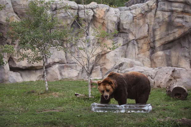 Staying cool at the zoo