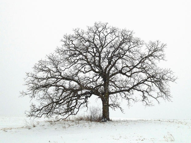 "Mark Hirsch photographs ""That Tree"""