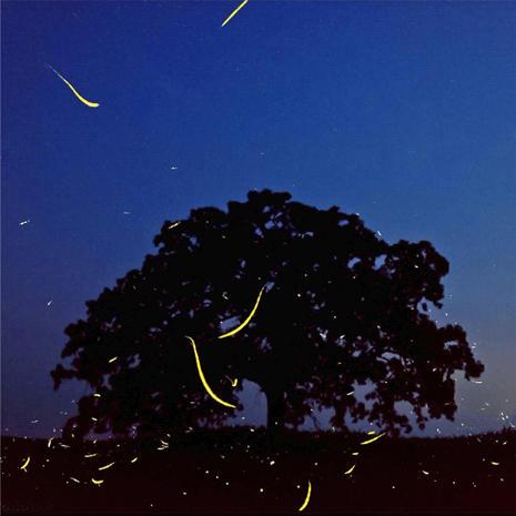 "Mark Hirsch photographs ""That Tree"""