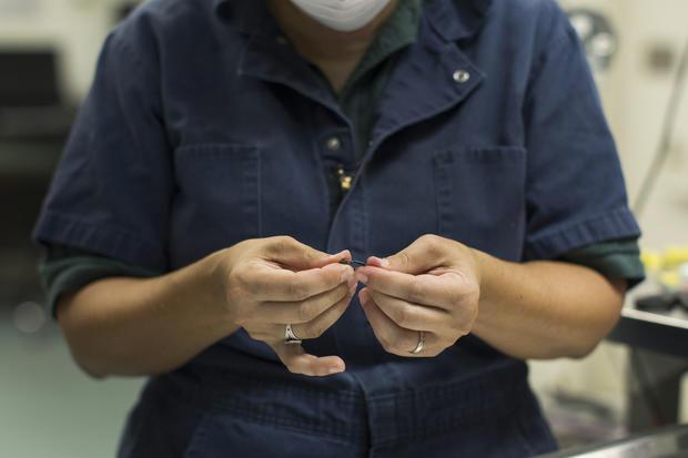 Tiny mice could be environmental saviors