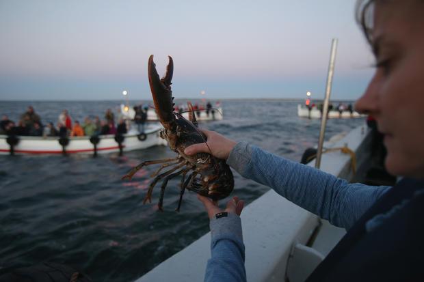 Teeny, tiny lobsters