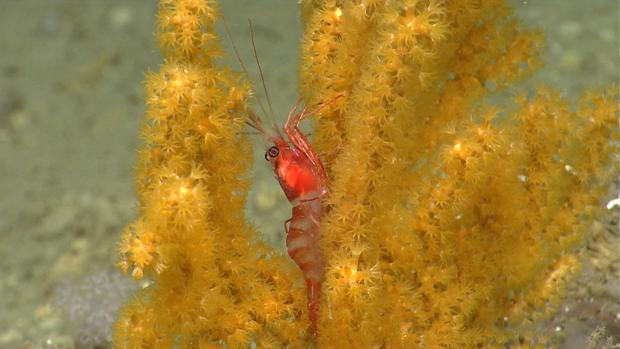 Incredible views of sea-floor life