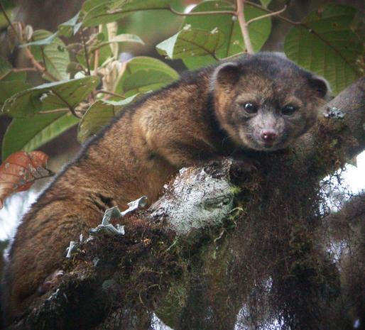 New mammal discovered