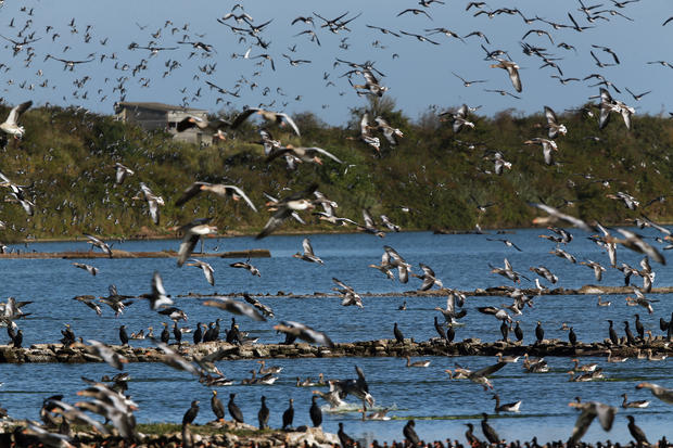 Seabirds create beautiful spectacle